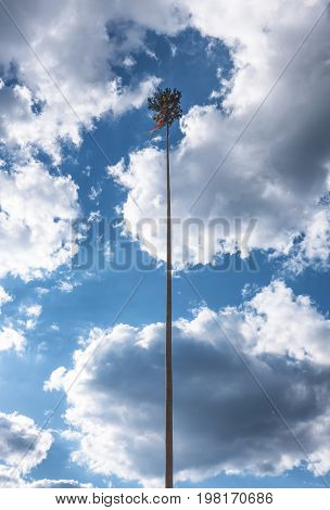 Decorated high tree - symbol of 1st May in Slovakia