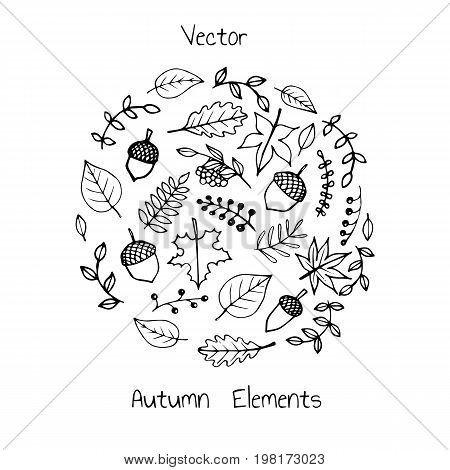 Vector hand drawn set of autumn elements: foliage berries and acorns. Maple sycamore birch beech and oak tree leaves. For your design.