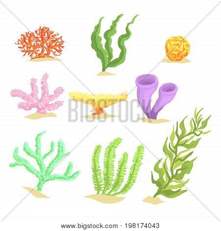 Set of cartoon underwater plants, seaweeds and aquatic marine algae vector Illustrations isolated on white background