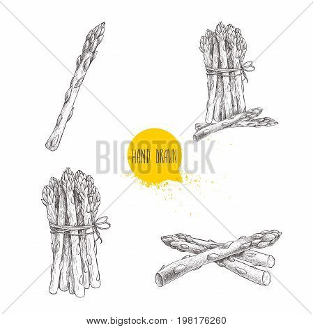 Hand drawn sketch style set of asparagus. Single bunch and composition.