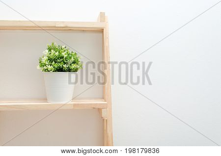 green plant tree leaf in white pot small decorative on wooden shelves with white wall background minimal houseplant nature concept selective focus copy space