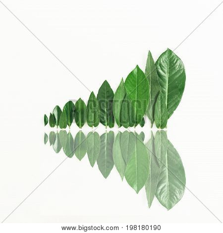 Minimal nature concept. Forest treeline made of green leaves on white background. Flat lay.