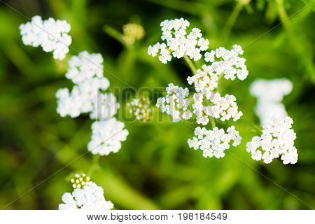 Macro Photography Of Small White Blossoms
