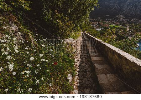 Stone staircase to Kotor's castle of San Giovanni. View to steps, Kotor Old Town rooftops and wild mountain flowers.