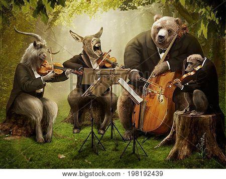 Donkey, goat, bear, monkey - a quartet of musicians