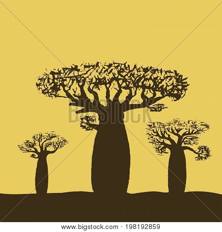 Vector illustration of three baobabs at sunset or sunrise