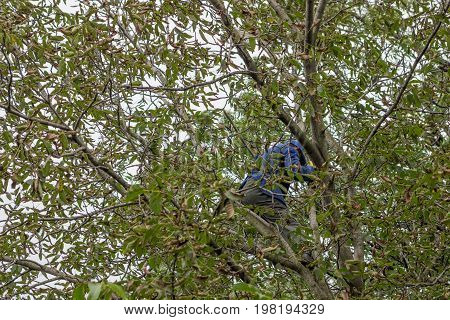 Man In A Walnut Tree 2