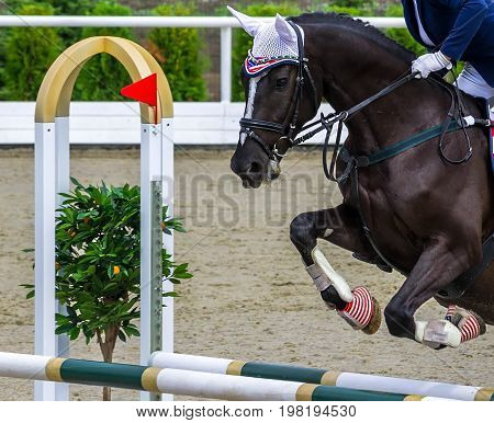 Black dressage horse and girl performing jump at show jumping competition. Equestrian sport background. Glossy black horse portrait during dressage competition.