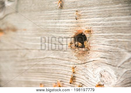 Hives in the apiary with bees flying on the landing boards. A close-up. The bees creep into the hive