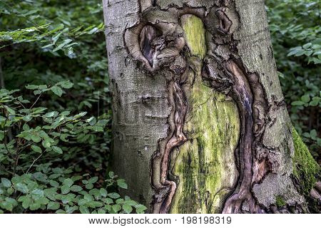 Old cracked creepy mossy tree bark cortex texture with green plant in forest