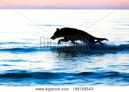 Silhouette Of A Dog Running On Water Against Horizon