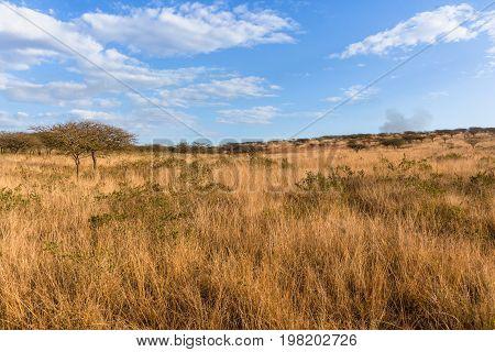 Wilderness African Grass Trees Landscape