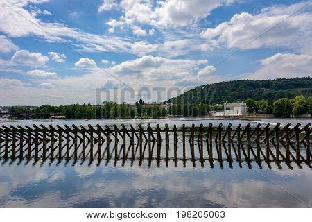 Starling on the Vltava River in Prague, Czech Republic