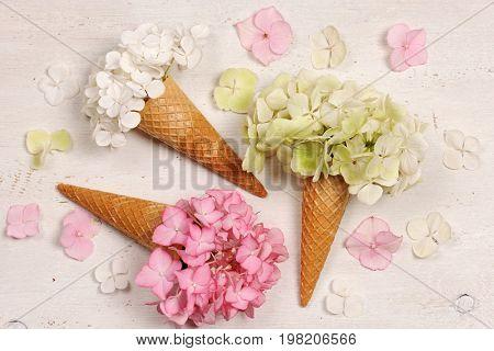 ice cream cones with hydrangea flowers