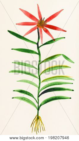 Specimen Of Flower On Ivory Colored Paper