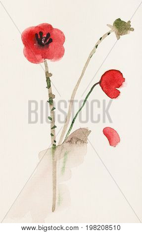 Sketch Of Red Poppy Flowers