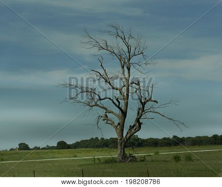 Solitary leafless tree in a fenced farmland in the countryside