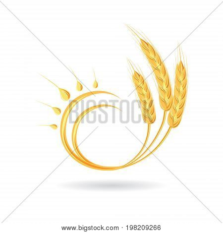 Wheat spikelet. Agricultural wheat, symbol, isolated on white background. Organic agricultural agricultural crops or beer label. Vector spikelets of wheat.