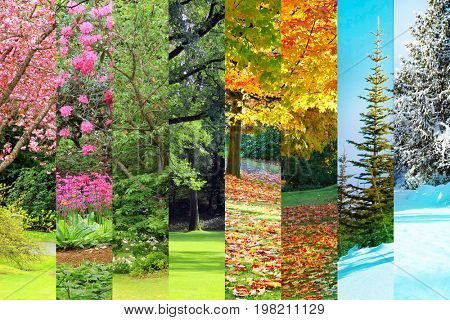 Collage of Cherry, maple, oak and cedar trees in four seasons. Spring, Summer, Fall, Winter.