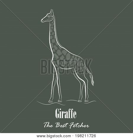 White Giraffe Silhouette Hand Drawing Digitally on the Green Gray Background with the Heading Below. Line Art Vector