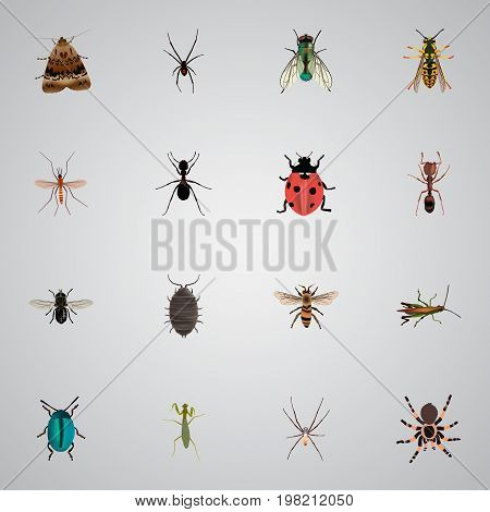 Realistic Spinner, Midge, Emmet And Other Vector Elements