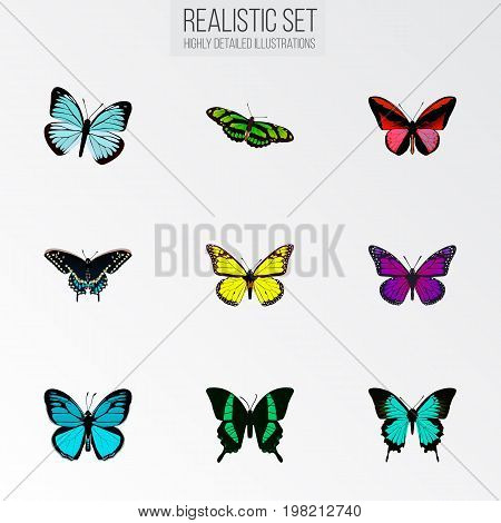 Realistic Copper, Green Peacock, Sky Animal And Other Vector Elements