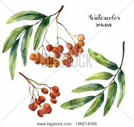 Watercolor rowan set. Hand painted mountain-ashe fruit with leaves and branch  isolated on white background. Botanical illustration for design