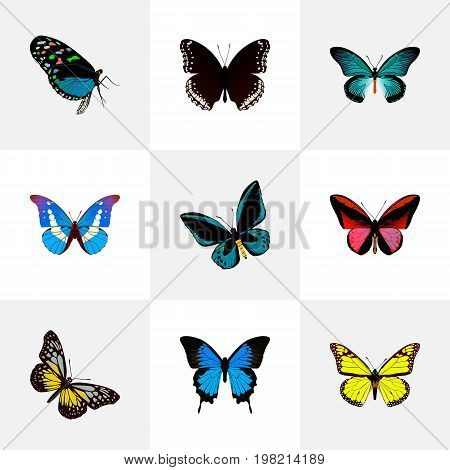 Realistic Archippus, Spicebush, Bluewing And Other Vector Elements