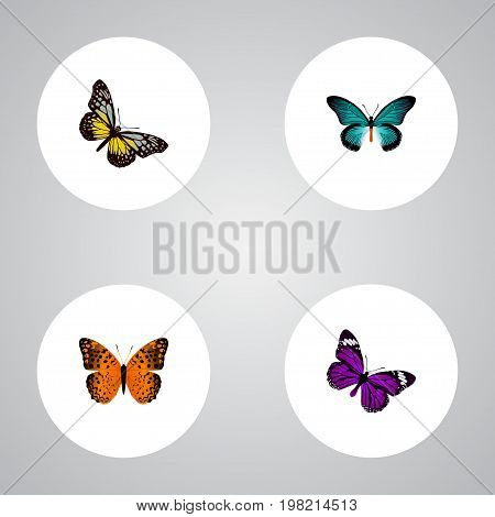 Realistic Butterfly, Summer Insect, Danaus Plexippus And Other Vector Elements