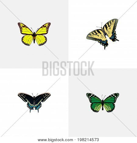 Realistic Morpho Hecuba, Archippus, Checkerspot And Other Vector Elements