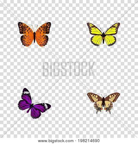 Realistic Tiger Swallowtail, Archippus, Butterfly And Other Vector Elements