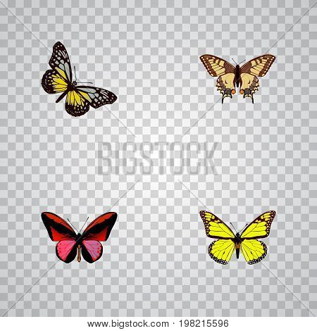 Realistic Callicore Cynosura, Archippus, Summer Insect And Other Vector Elements