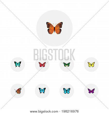 Realistic Danaus Plexippus, Azure Peacock, Birdwing And Other Vector Elements