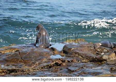horizontal image of seals on rocks facing ocean water