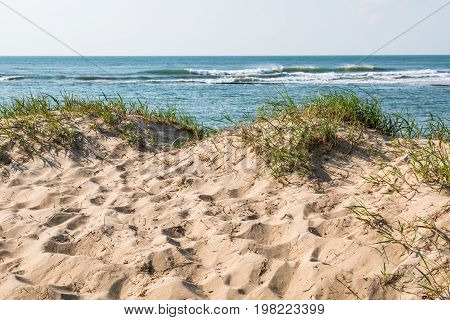 Sand dunes with grass and an ocean background in Virginia Beach, Virginia.
