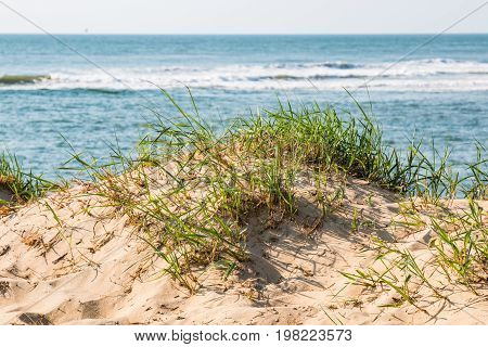 Beach grass in dunes with an ocean background in Virginia Beach, Virginia.