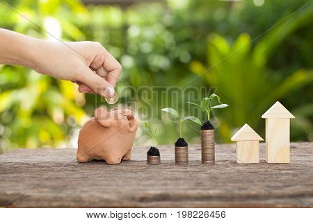 Money and plant with hand's women putting golden coins in piggy bank Saving money concept concept of financial savings to buy a housetrees growing in a sequence of germination on piles of coins Growth business money.