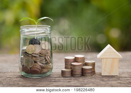 Money and plant Saving money concept concept of financial savings to buy a housetrees growing in a sequence of germination on piles of coins Growth business money.