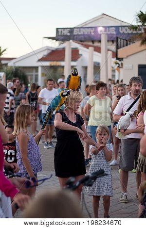 Vodice, Croatia, July 4, 2017, woman with parrot Ara Ararauna on her head