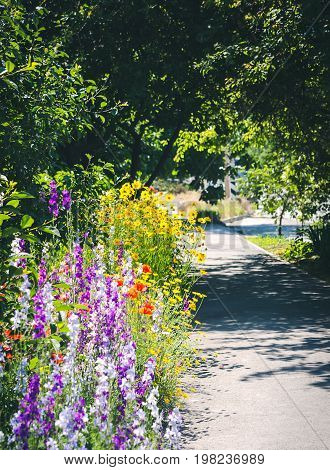 Countryside narrow street with trees, flower border and grass in the morning sun. Close up of a coreopsis, poppy and delphinium.