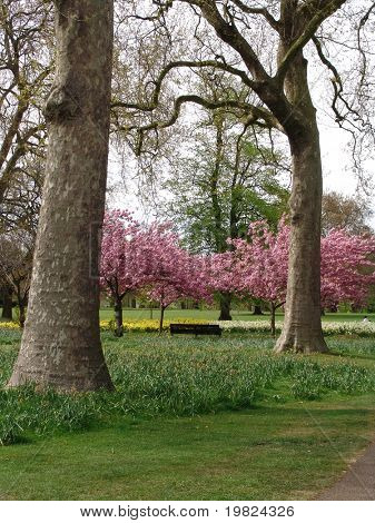 Trees and blossoms in Greenwich Park London