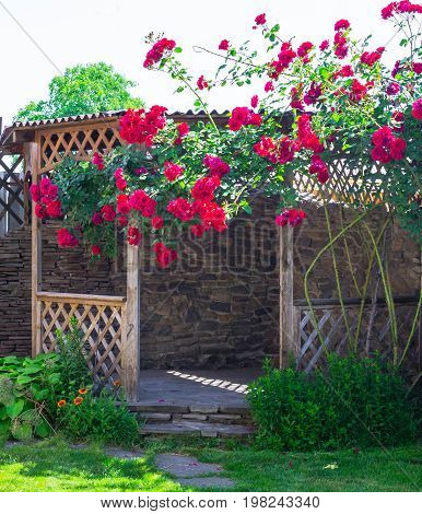 Wooden arbor in garden, surrounded by green lawn. Alcove in the summer garden with beautiful flowers of climbing rose. Bright sunny day.