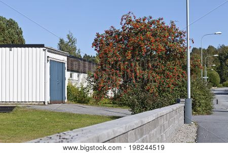 UMEA, SWEDEN ON SEPTEMBER 10. View of a stone wall, building, garden, street and a rowan on September 10, 2015 in Umea, Sweden. Rowan-berries in the tree. Editorial use.
