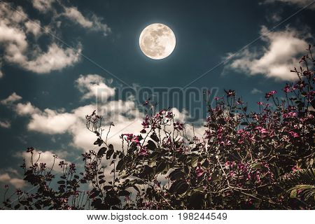 Colorful Flowers Blooming Against Night Sky And Clouds With Bright Full Moon.