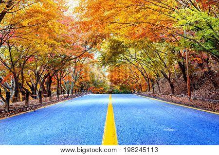 Autumn In National Park, South Korea.