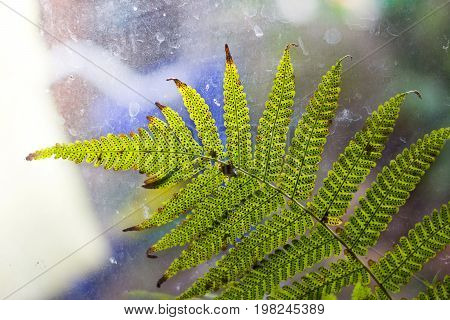 Green fern leaf texture with dot of spore plant in warm light