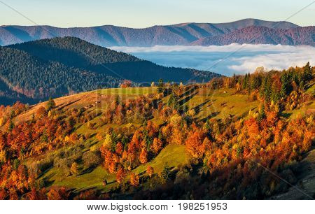 Foggy Valley Behind The Hill At Autumn Sunrise
