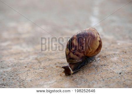 Snail creeping on the wet street .