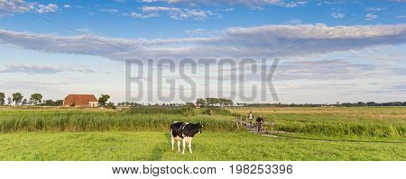 GRONINGEN, NETHERLANDS - AUGUST 01, 2017: Panorama of a cow and people on a bicycle path in Groningen, Holland