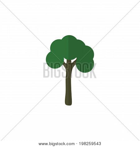 Evergreen Vector Element Can Be Used For Evergreen, Tree, Timber Design Concept.  Isolated Garden Flat Icon.